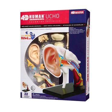 modelo-anatomico-del-oido-humano-x-22-piezas-2-4893409260559