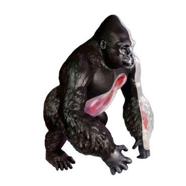 modelo-anatomico-4d-de-gorila-x-29-piezas-1-4893409260900