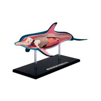 modelo-anatomico-4d-de-delfin-x-18-piezas-1-4893409261037