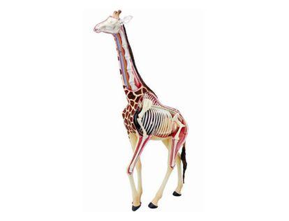 modelo-anatomico-4d-de-la-jirafa-x-27-piezas-1-4893409261068