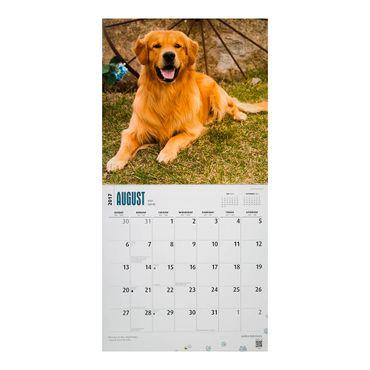 calendario-golden-retrievers-2017-square-2-9781465055828