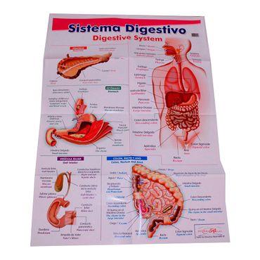 lamina-sobre-el-sistema-digestivo-1-7707265505518
