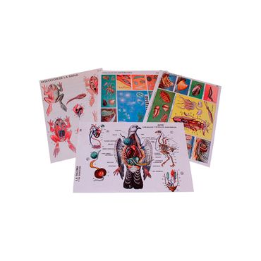 laminas-sobre-diseccion-de-animales-moluscos-e-invertebrados-1-7707260100619