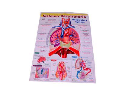 lamina-sobre-el-sistema-respiratorio-1-7707265505525