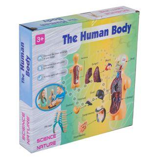 modelo-anatomico-del-cuerpo-humano-1458784847776