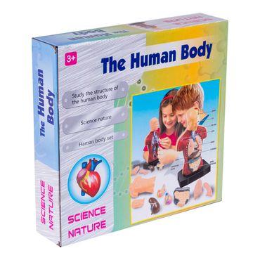 modelo-anatomico-del-cuerpo-humano-9588784847772