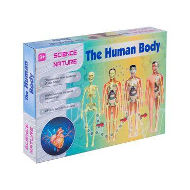 modelo-anatomico-del-cuerpo-humano-1-9688784847779