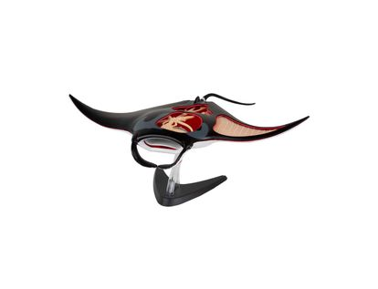 modelo-anatomico-4d-manta-raya-29-piezas-4893409260108
